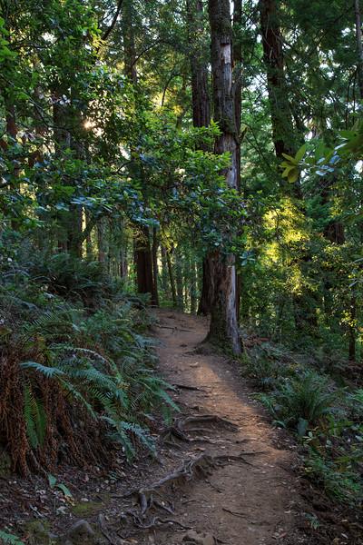 Ben Johnson Trail