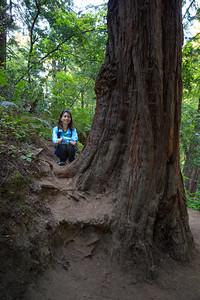 Climbing the Redwood