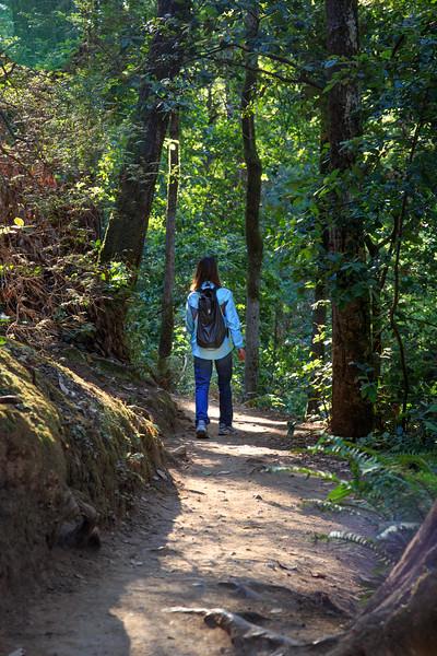 Hiking Muir Woods