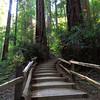 Hillside Trail