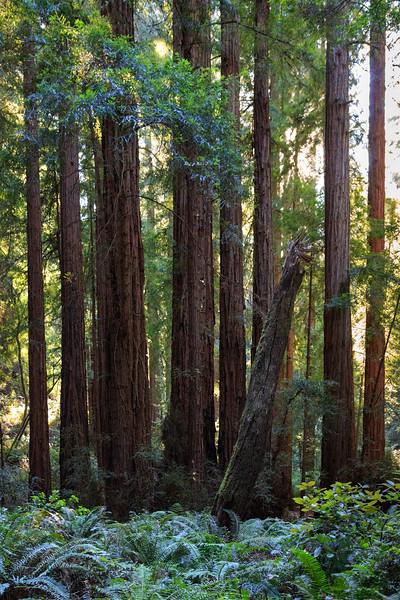 Bohemian Grove Trail