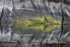 """Reflections galore!<br /> <br /> Granite cliff with moss reflected in the ocean #1, Mussel Creek, mid-coast British Columbia.  In this image the crack lines in the granite and the moss plus its reflection appear to form an arrow.<br /> <br /> This series of photos was taken at the base of a vertical granite cliff that plunged into the ocean.  There were some wonderful reflections where the cliff met the still water.  All the photos were taken from the water and are as shot with no digital alterations, filters etc.  They make an interesting series of abstracts.<br /> <br /> Nature's patterns continue to astonish. I invite you to take a look at all of them (plus more tomorrow) to find your favorites.  See here: <a href=""""http://goo.gl/qCC9RS"""">http://goo.gl/qCC9RS</a><br /> <br /> 18/10/13  <a href=""""http://www.allenfotowild.com"""">http://www.allenfotowild.com</a>"""