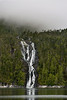 Waterfall emerging from the mist<br /> <br /> In the spring the high snowfields in the Cascade Mountains of the Great Bear Rainforest start to melt and the water cascades down the walls of the fjords into the sea.