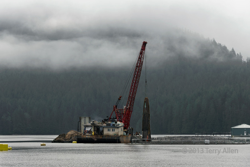 Pulling up the nets at a salmon farm, Mussel Inlet, mid-coast BC