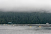 Salmon fam in the morning mist, Mussel Inlet, mid-coast BC