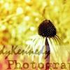 Yellow flower3