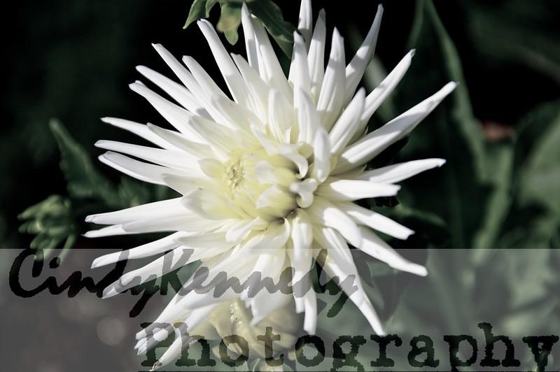 Faded Flower 2