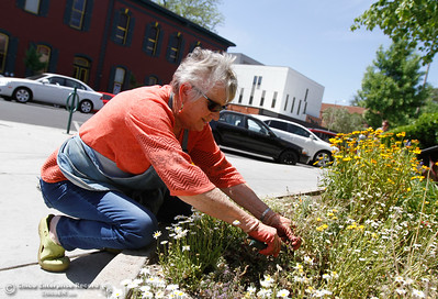 Sherri Sommer with the Chico Horticulture Society works to maintain the floral display in front of the Chico Museum Sign Wednesday April 20, 2016 in Chico, Calif. (Emily Bertolino -- Enterprise-Record)