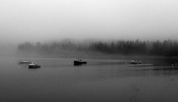 Monochrome  Deer Isle