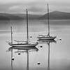 Sailboats, Castine Maine