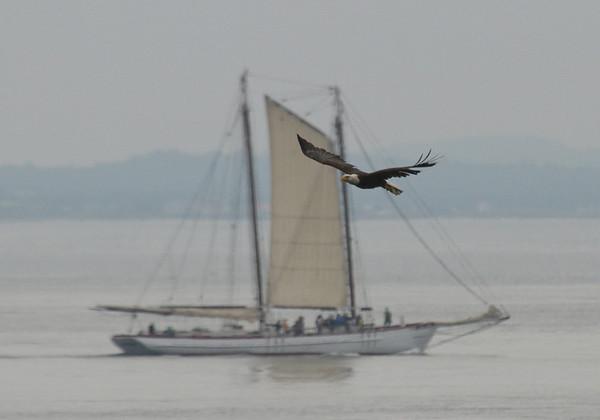 Eagle and Schooner