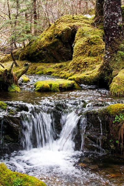 RBP IMG_2710 Water & Moss Perserverance Trail Juneau AK
