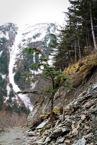RBP IMG_2797 Perseverance Trail Juneau AK