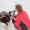 Getting kisses from the sled dogs.
