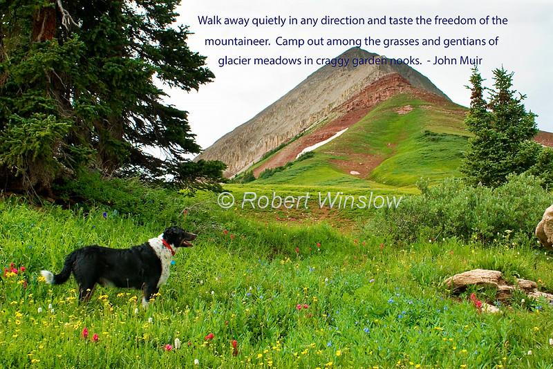 Dog, Wildflowers in Alpine Meadow below Engineer Peak (12,968 feet), San Juan National Forest, Durango, Colorado, early August