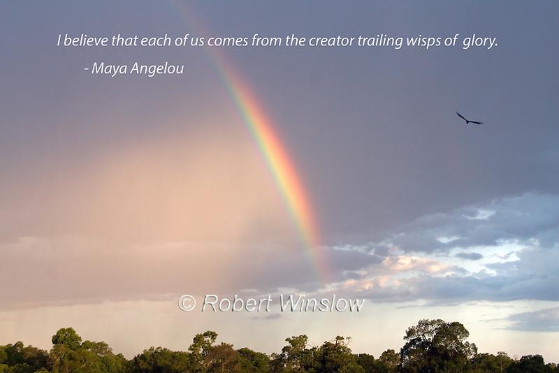 Rainbow, Bird Flying, Masai Mara National Reserve, Kenya, Africa