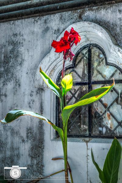 Graceful Flower