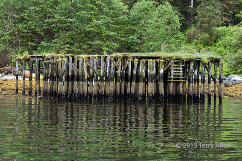 Ruined wharf with reflections, Butedale, Princess Royal Island,  mid-coast British Columbia