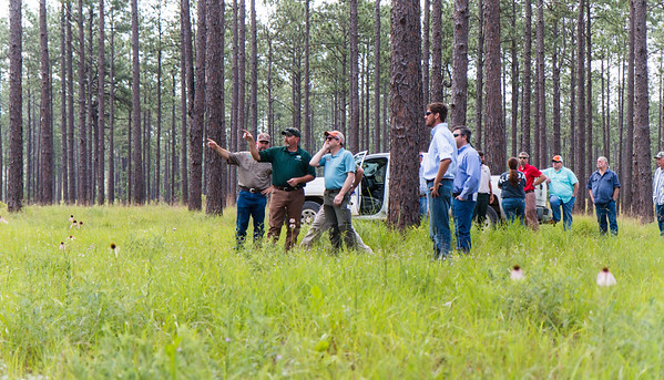 Quail Forever Kasatchie National Forest Tour May 2016