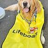 _0019973_RNLI_Lifeboat_Walk_2012
