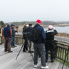Viewing Bunker Pond from the Cape May Hawkwatch platform.