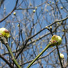 Spring buds at Higbee Beach