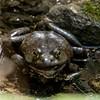 Bullfrog, Central Park
