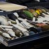 Skins at AMNH