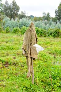 Rwandan scarecrow!