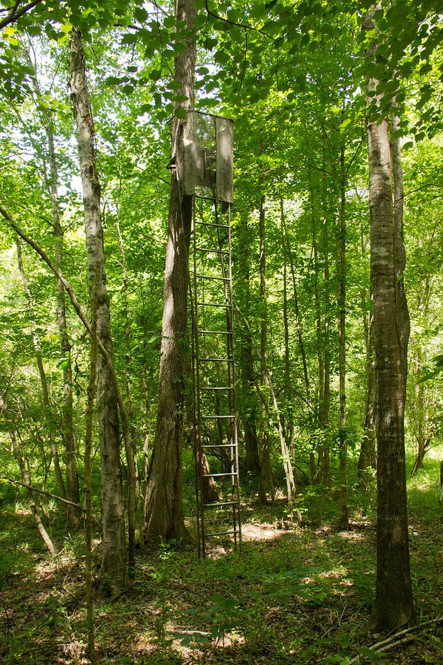 woods-deerstand1