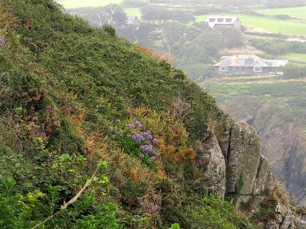Agapanthus (blue) and Montbretia (orange) grow wild on the cliffs and paths.