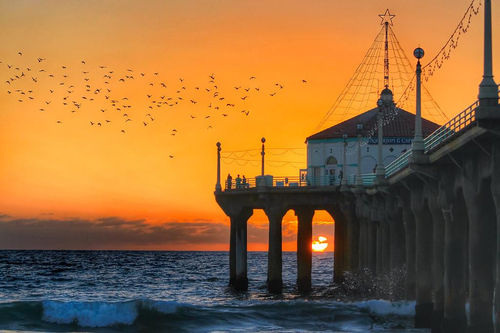 Sunset Gulls