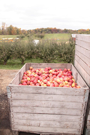 Spicer Orchard