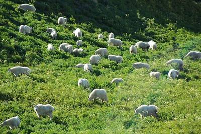 They moved towards us and started grazing. They got a little too interested in us and we had to move away.