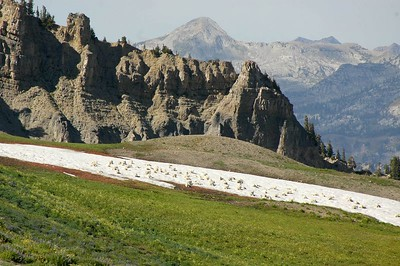 This is what makes it so fun. A herd of about 100 Rocky Mountain Goats chilling on a snow field. The largest heard I've ever seen was 32.
