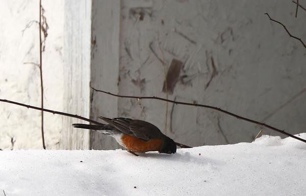 Stand Alones - Robins & Hawk