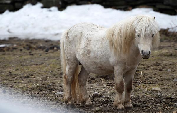 Stand Alones - Retreat Farm Mini Horses & Donkeys