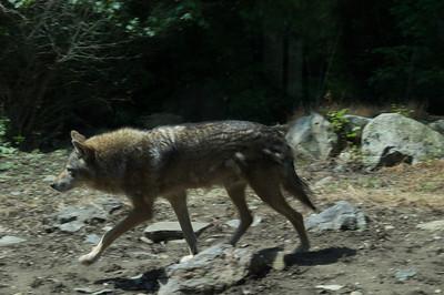 5-30-2013 Stone Zoo 005