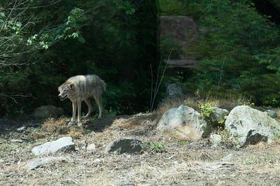 5-30-2013 Stone Zoo 006