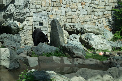 5-30-2013 Stone Zoo 004