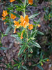 Shalimar had trouble keeping the camera steady while photographing this flower, so I set the camera to shutter priority and auto ISO to make it a little more hand-holdable. (Composition by Shalimar)