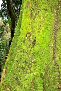 UG 194 Moss