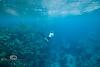 Blue Abyss - Mahagony Bay, Roatan - Photo by Pat Bonish