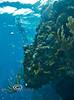 Below the Ledge - Mahagony Bay, Roatan - Photo by Pat Bonish