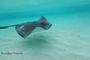 Floating Past a Stingray - Caymen Islands - Photo by Pat Bonish