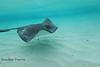 Floating Past a Stingray - Caymen Islands - Photo by Pat Bonish