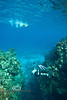 Diving through the Cut - Roatan, Honduras - Photo by Pat Bonish