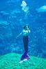 Luring Stare of a Mermaid - Weeki Wachie Springs Florida - Photo by Pat Bonish