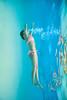 Learning to Breathe - Underwater Photography by Pat Bonish, Bonish Photo