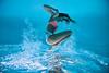 Cannonball - Underwater Photography by Pat Bonish, Bonish Photo